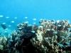 Na nog een nachtje slapen ga ik nogmaals snorkelen, nu bij Coral Bay,