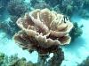 ik zie bijzonder mooi gevormde koralen en veel vissen,