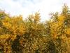 en ook weer die schitterende Mimosa!