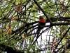 en ik zie hier zelfs papegaaitjes in de bomen!