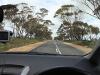 Daarna rijden we onder grote Eucalyptusbomen door,