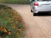 De dag er na rijden we zuidwaarts langs bermen vol bloemen