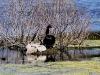 ook deze zwarte zwaan heeft (nu nog grijswitte) jongen