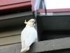 ze landen gewoon op ons balkon
