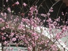 want het is hier nu voorjaar!