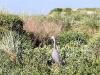 rondstappen in de overal dicht begroeide duinen.