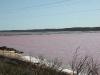 en zien de volgende dag het Pink Lake - dat echt roze is!