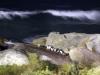 Maar waarom dan ook nog deze onscherpe avondfoto bij zee??