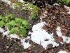 Sneeuw in Tasmanië? Dat zou kunnen, maar dit was een onverwachte hagelbui!
