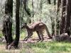 waar we weer kangoeroes zien,
