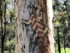 en o.a. sporen zien van een Aboriginal inwijding.