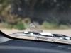 een wild duifje op onze auto