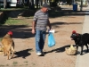 naar deze Australiër met zijn maf aangeklede honden...