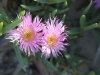 in plaats daarvan al wel de prachtigste wilde bloemen