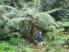 Woensdag rijden we naar het dichte Palmvarenbos bij het vuurmeer -