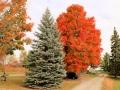 Kijk maar, hier zie je hoe ik stopte onder deze nu mooi gekleurde boom!