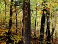 En in het bos rond de Hardwood Lookout zie ik hoe spechten bomen gebruiken