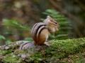 en hier kruist ook weer een eekhoorntje mijn pad door het bos.
