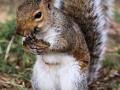 maar Corry geniet daar tegenover ook van de rondspringende eekhoorntjes.
