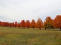 maar zien eerst nog deze prachtige oranje bomenrij,