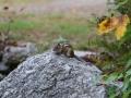 en zien na aankomst naast ons motel weer een baby eekhoorntje!