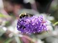 Even speciaal voor onze Tim: de bijen vinden hier ook jouw goud.