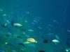 er is hier een enorme visrijkdom