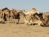 Maar Corry en ik genieten ook samen als we naar de kamelenmarkt in Shalateen gaan!