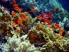 Maar toch vergaap ik me liever aan de onderwaterpracht van Marsa Alam: