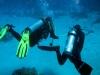 Eén duiker moest deze duik aan de reserve: die gele slang