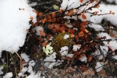 72 maar waar nog sneeuw ligt zien we toch ook weer heel veel vegetatie