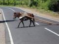 106 en dit paard dat zijn kar verloor!