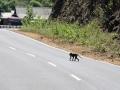 107 Maar ook steeds aapjes die de weg oversteken