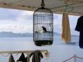 123 Aan boord hangen vogelkooitjes van de bemanning