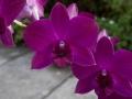 134 terwijl de orchideeën haar aankijken.