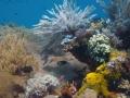 150 Ik geniet van de koralenpracht,