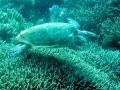 167 zie dan ook mijn zoveelste schildpad voorbij roeien