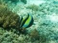 21 De volgende ochtend pak ik mijn snorkelspullen voor een kijkje onder water