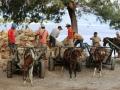 29 en zien dan hoe die kleine paardjes overal voor worden gebruikt ~