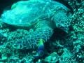 47 maar vergelijk hem nu eens met deze reuzen-schildpad!