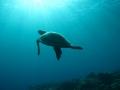 51 Dichtbij de kust stijgen steeds schildpadden op naar het licht