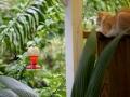 maar ik probeer - net als deze kat - onze kolibiries te 'pakken'!