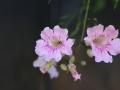 Ik kan overal in Boquete veel verschillende, prachtige bloemen fotograferen