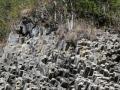 omhoog gestoten basaltblokken, geformeerd toen Panama ontstond.