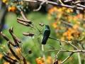 maar ook kolibries, die hier af en aan vliegen.