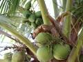 zie ik hoe een eekhoorntje uit een kokosnoot drinkt