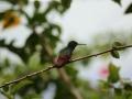 waar we gelijk heel veel van die kleine lang-snavelige Kolibries op bezoek krijgen...