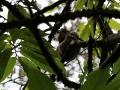 hij merkt niet alleen als eerste deze Luiaard op, heel hoog in een boom