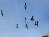 terwijl honderden vogels over ons heen vliegen