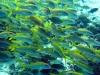 … dook ik even later tussen de vissen (met een ingepakte voet),